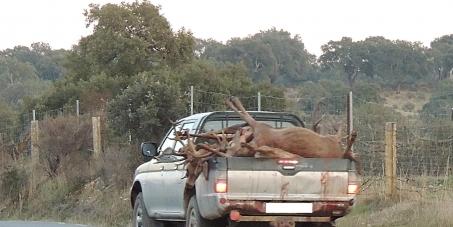 Grupos políticos Asamblea de Extremadura: Que no vuelvan a celebrarse monterías en el Parque Nacional de Monfragüe