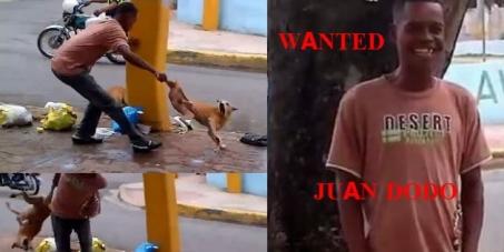 Sr. Roberto Salcedo, Ayuntamiento de Santo Domingo: Find Juan DODO acesino de peros !