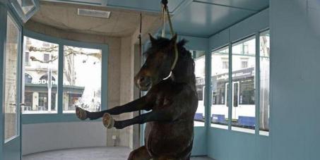 Exposition d'un cadavre de cheval au nom de l'art.