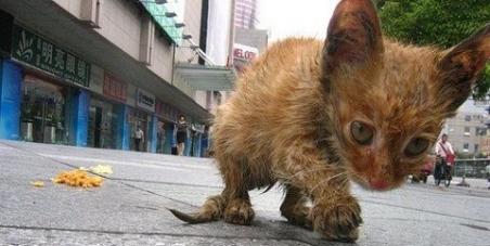 Vétérinaire Fédéral et Parlement Suisse: La stérilisation/castration obligatoire des chats libres et errants Suisse