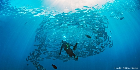 Save our NSW Marine Sanctuaries for Marine Life and Divers!