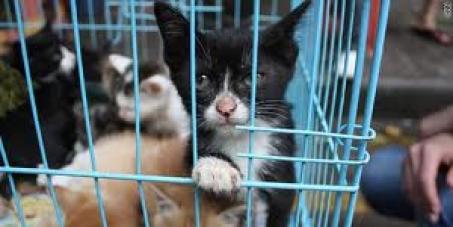 Queremos que se prohiba, se procese y se condene a quienes consuman carne de perros y gatos y al comercio de sus pieles