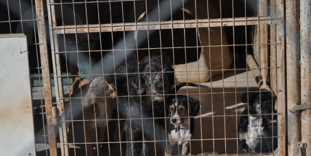HELLENIC REPUBLIC - MINISTRY OF RURAL DEVELOPMENT & FOOD: STOP CATS AND DOGS TRADE MISSIONS IN E.U.