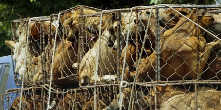 Boycott PyeongChang 2018 Winter Olympics in South Korea, A Dog Eating Nation!