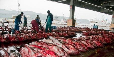 Regarder la pêche dhiver sur altae