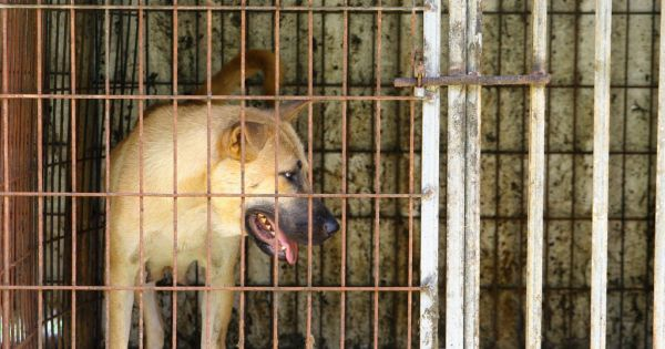 Gwangju, South Korea, Shut down the illegal dog farms!