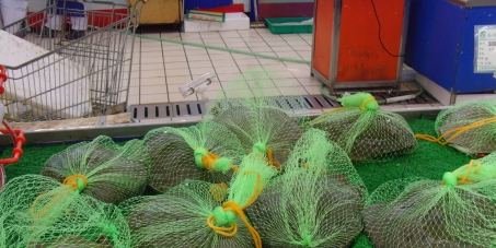 The horror of Tesco selling live, packaged turtles in their supermarkets.