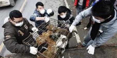 Vamos acabar com o sacrifício de cães e gatos na China