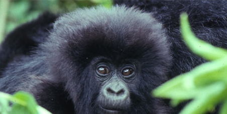 Stop oil exploration in Virunga National Park