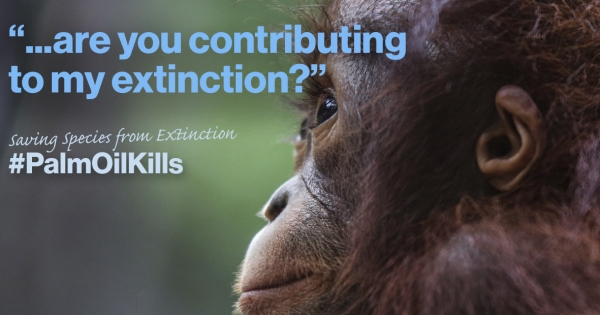 Global leaders: #PalmOil is main contributor to climate change and habitat destruction. We refuse to be part of this!
