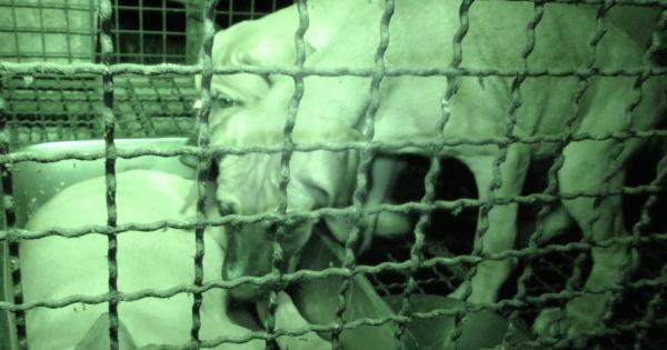 Gunwi, South Korea, Shut down the illegal dog farms!