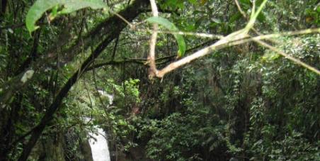 Gobernación de Antioquia, Cornare, Municipio del oriente(Guarne, Rionegro).:  le pedimos que impida la construccion del tunel oriente