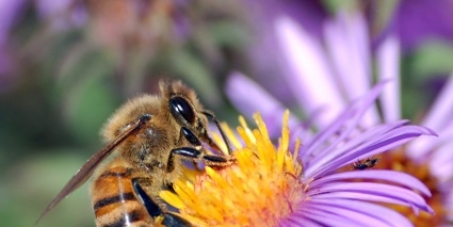 Save Canadian Bees!