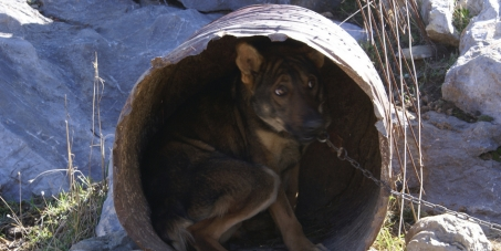 Greek government : Enforce existing laws to save the Barrel Dogs