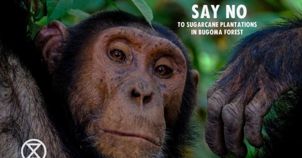 SAVE BUGOMA  FOREST
