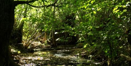 Appel pour un moratoire du projet de barrage de Sivens et des études indépendantes