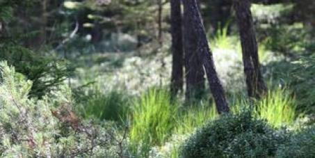Nein zur Abholzung des Schorenmoos / Allgäu