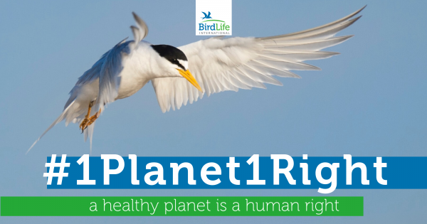 A new human right: The right to a healthy natural environment