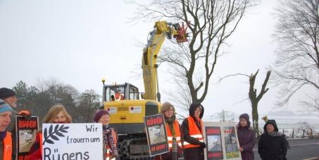 Stoppt die Alleefällungen bei Samtens auf Rügen!