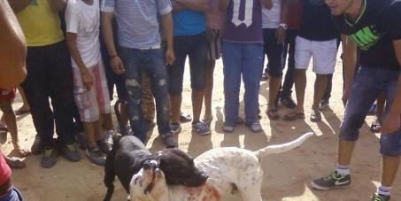 Président de la république de Tunisie : L'interdiction des combats de chiens