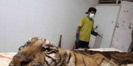 """Le """"Parc annimalier"""" de Surubaya: La fermeture du Zoo et le sauvetage des animaux présent"""