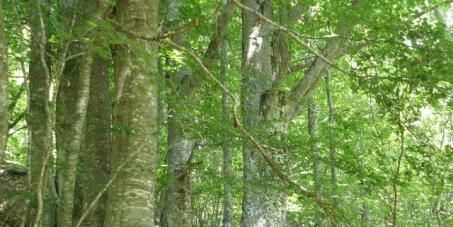 До МП на РБ, Председателя на НС, МЗХ, МОСВ, ИАГ: Спиране на унищожението на горите в България