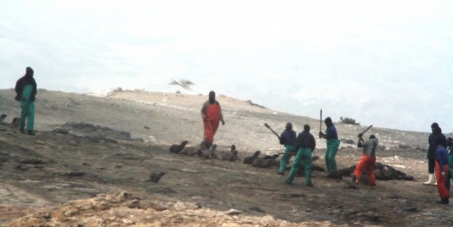 The Seals Of Nam - End the seal hunt in Namibia!