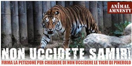 Non uccidete le tigri di Pinerolo
