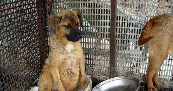 Geoje, South Korea, Shut down the illegal dog farms!