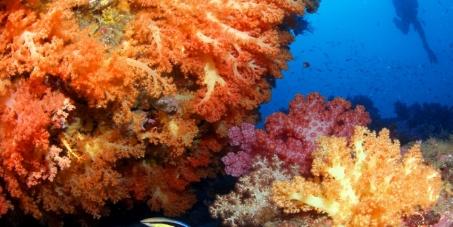 IUCN: Save Jeju Island