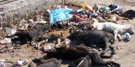 Le respect des lois pour les animaux en Europe