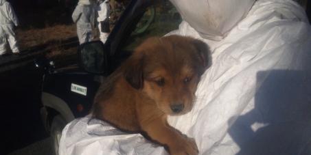 大熊町の帰還困難区域内へ、動物救護のための立ち入りを許可せよ。