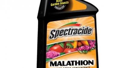 Collectivités de Guyane, Ministère de la Santé, Ministère de l'Ecologie: Interdiction d'un insecticide toxique (le Malathion) en Guyane !
