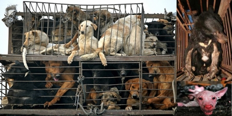 Petition the Chinese government to stop the Yulin dog eating ...