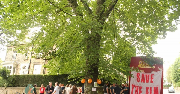Sheffield City Council, UK: Save the Sheffield Elm