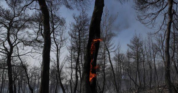 «Ελλάδα - Να μετατραπεί τώρα ο εμπρησμός δασών ΜΟΝΟ σε κακούργημα»