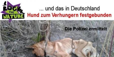 Angela Merkel: Abschaffung der Tötungslager für Hunde in den Balkan-Ländern und allen anderen Ländern