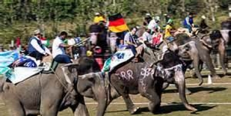 "Stop Nepal from building a stadium for ""elephant games!"""