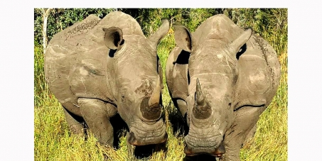 South African Defence Force (Military) must stop our Rhino from being killed by Poaching syndicates.