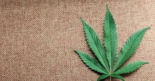 Basta proibizionismo! Cannabis legale subito!