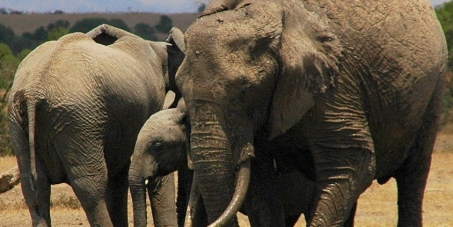 Tanzania: Stop the poaching of elephants!