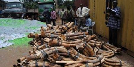 Uganda Please Destroy 3 tons of Blood Ivory - don't return it!