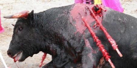 Abolir las corridas de toros en Colombia