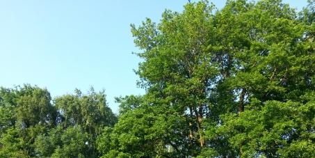 Pour la préservation du poumon vert de L'Orée du Lys menacé par le nouveau PLU de Lamorlaye