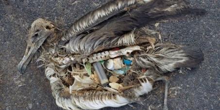 Ville de Gaspé: Bannir les sacs de plastiques à usage unique dans les commerces de Gaspé
