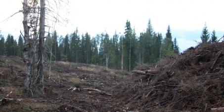 Metsähallitus Company: We call on you to save Ostola Forest in North Karelia, Finland