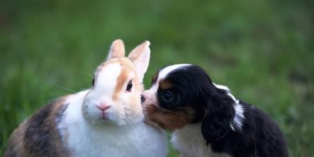 Selo nos produtos informando se testa em animais