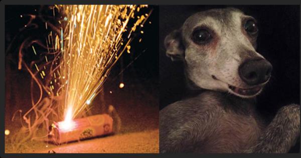 Regulamentação no uso de rojões e fogos de artifício