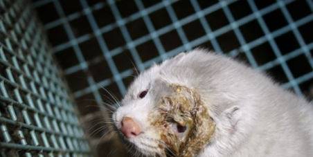 We demand the Greek government to stop financing the fur trade