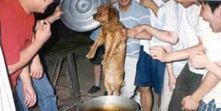 Ban Ki Moon UN Sec Gen (World Education) - kids in your OWN COUNTRY are taught to torture dogs?? This is a hypocracy.